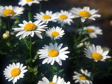 Flower1001_4