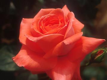 Flower1006_3